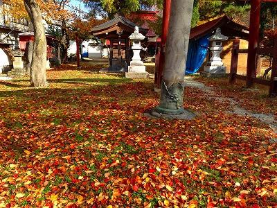 秋の桜の落葉