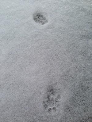 朝に目が覚めて玄関を開けるとそこには猫の足跡が