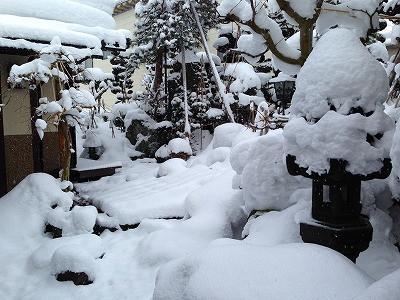 0今朝の我が家の庭です。
