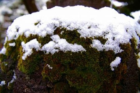 石灯籠の苔のアップと雪