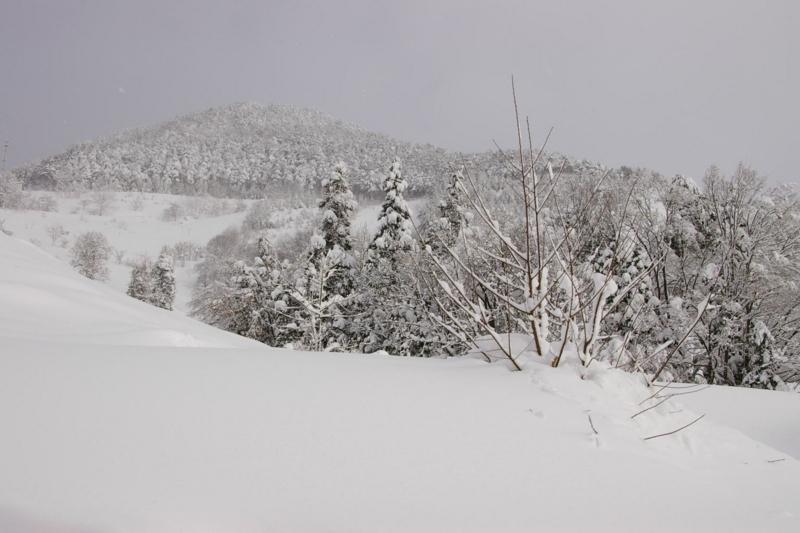 雪原の柿の木