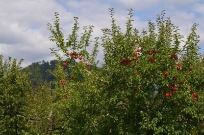 大森山とリンゴ