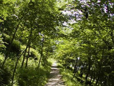 若木山の登り道も、すっかり緑に覆われて。