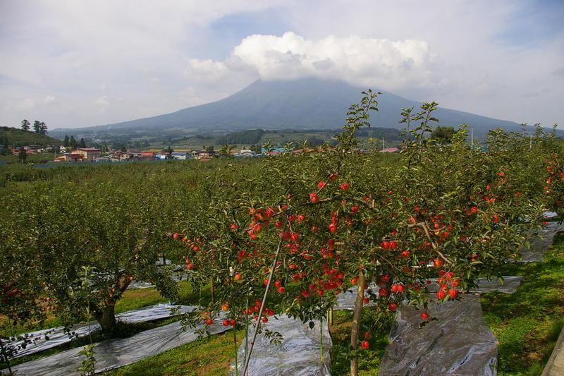 岩木山にはりんごがよく似合う