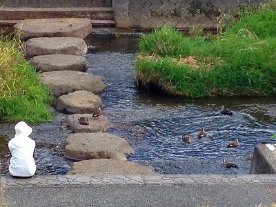 川にはたくさんの鴨がいました