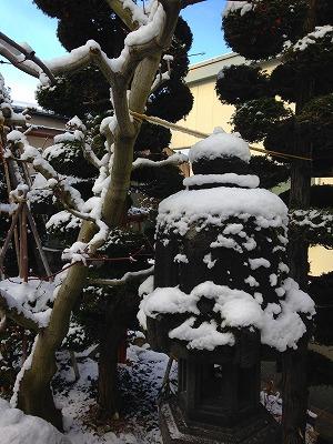 冬のハウチワカエデと石灯籠です。