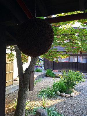寿屋さんの杉玉です。