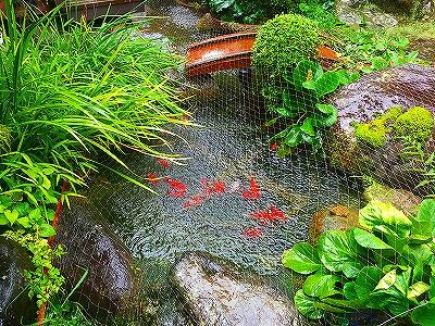 我が家の池
