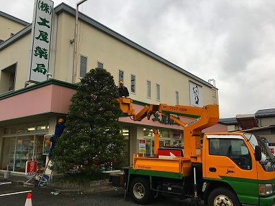 土屋薬局 クリスマスツリーの飾りつけ