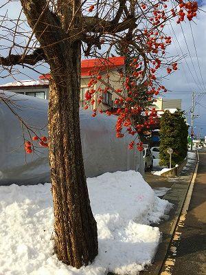 大石田の柿