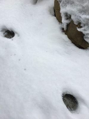 ネコの足跡が!
