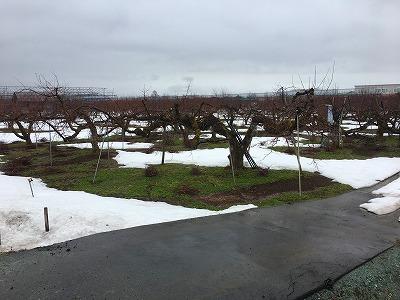 3月の果樹園の雪景色