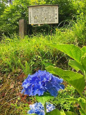 羽州街道一里塚跡に咲いた紫陽花