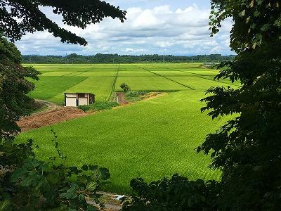 猿羽根山からの田んぼの眺め