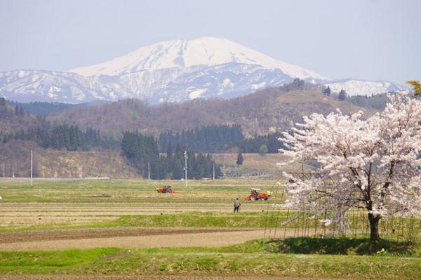 花咲く鳥海山