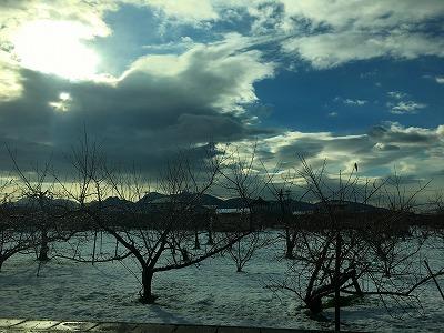 東根市の果樹畑