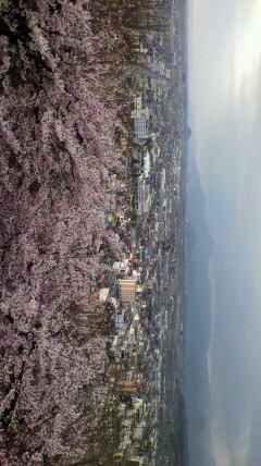 舞鶴山山頂からの眺め。若木...