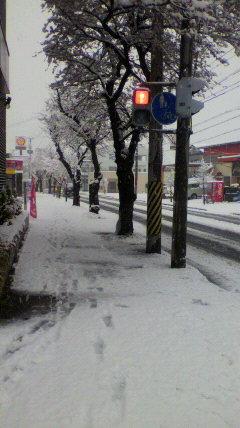雪が降りました。4月の雪は...