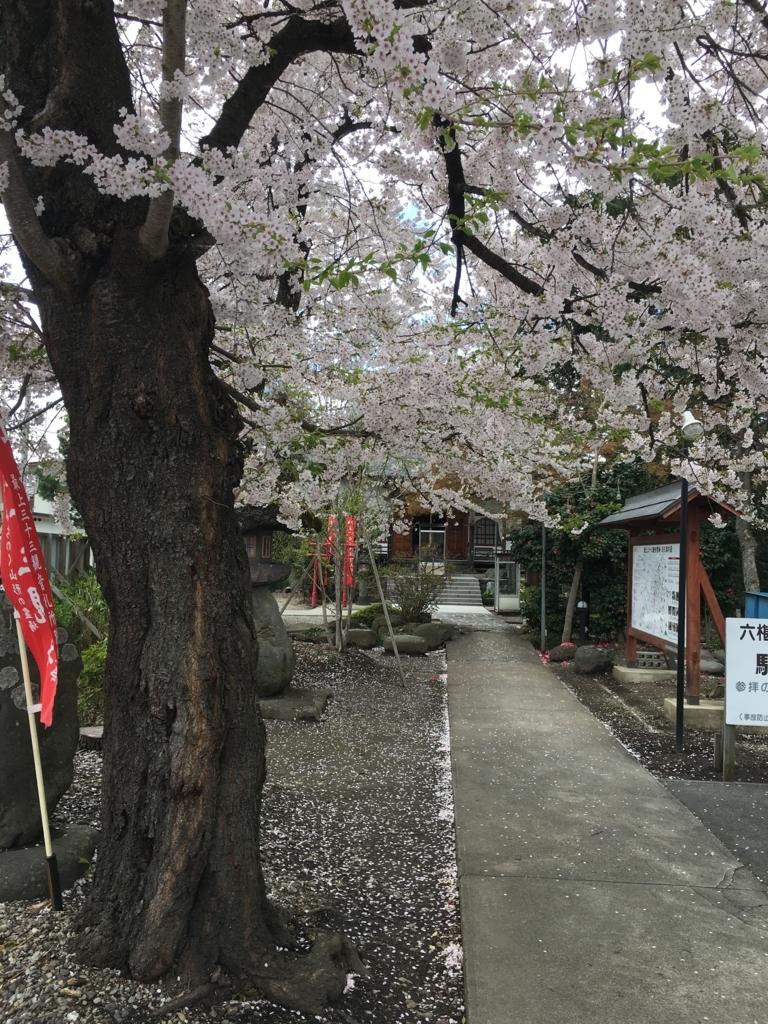 山形市鉄砲町の六椹八幡宮の桜、とても綺麗でした