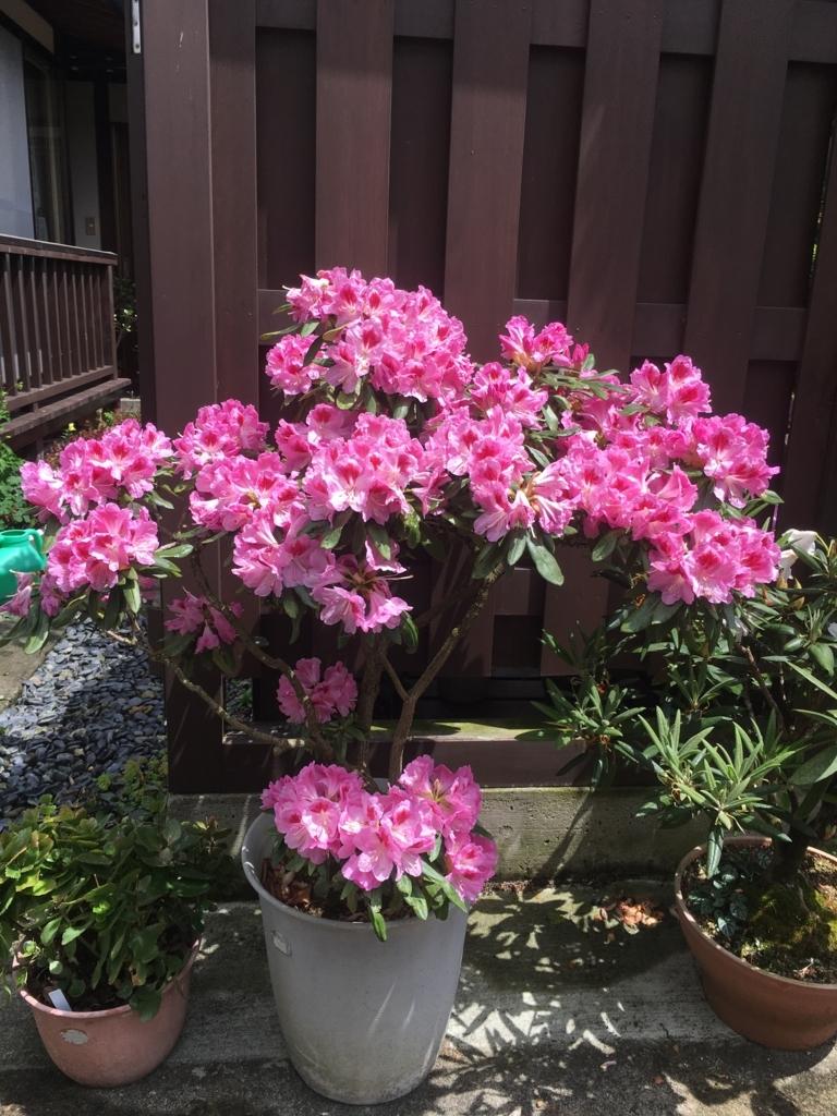 石楠花です