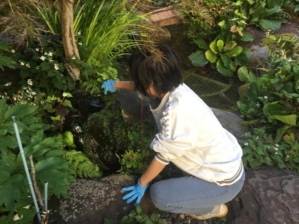 妻と今朝はお庭の掃除をしました