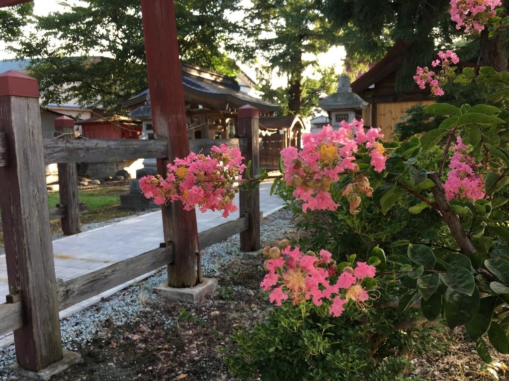 サルスベリの花が綺麗