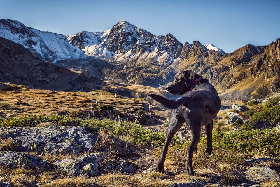 山の中を歩く犬