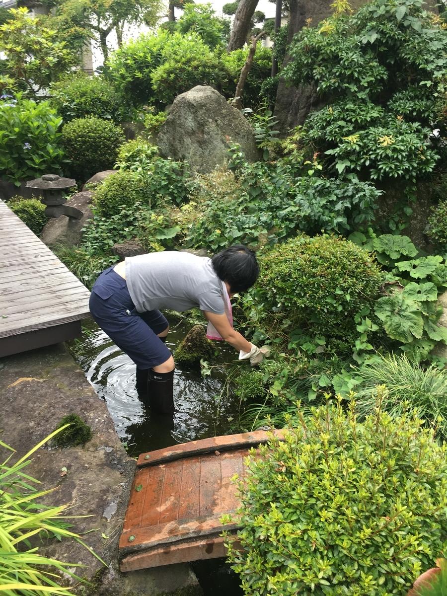 妻と池の掃除をしました