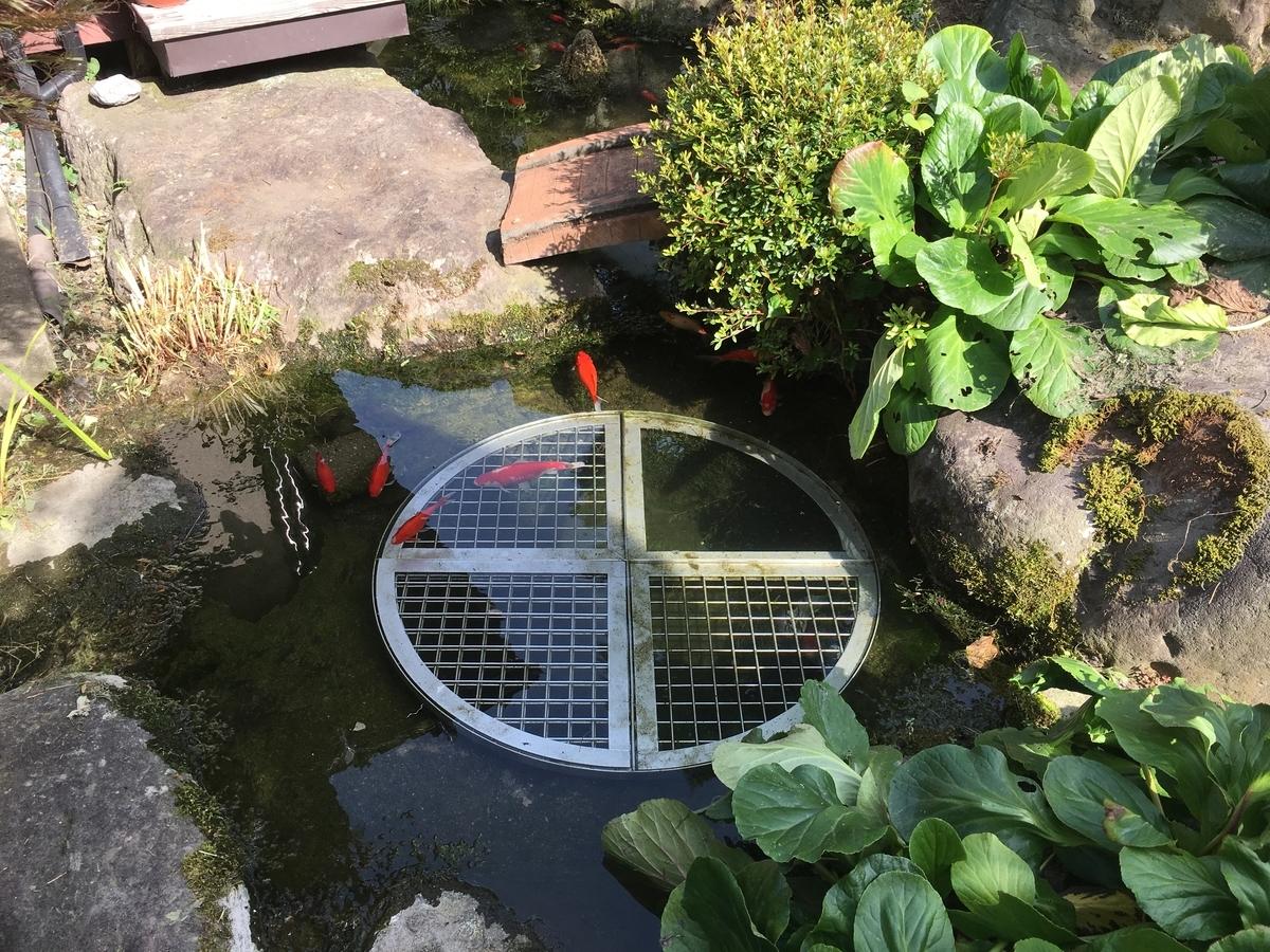 の池、ピカピカです