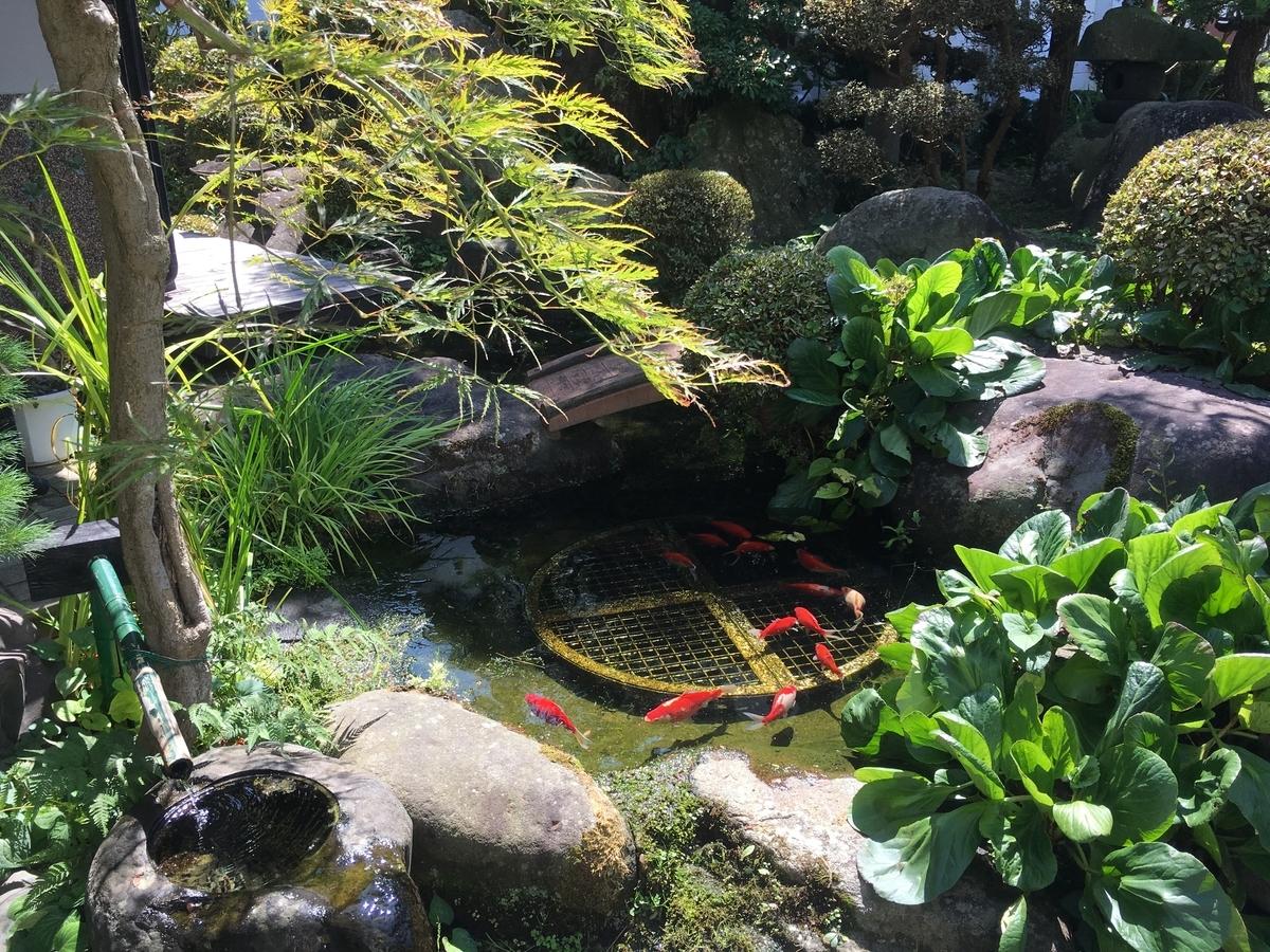 池の金魚は元気に泳いでいます
