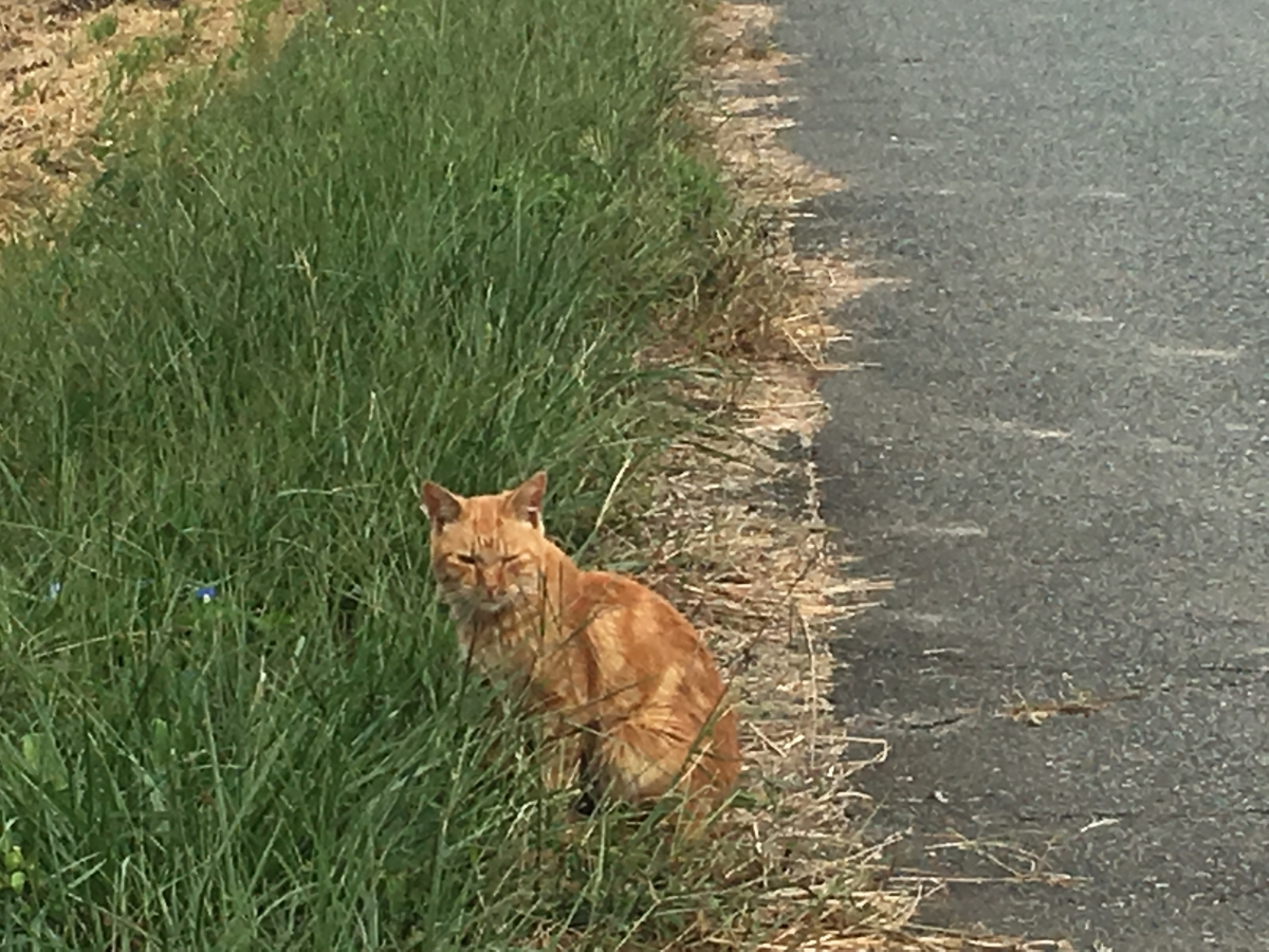 なかなか逃げない猫でした。かわいい