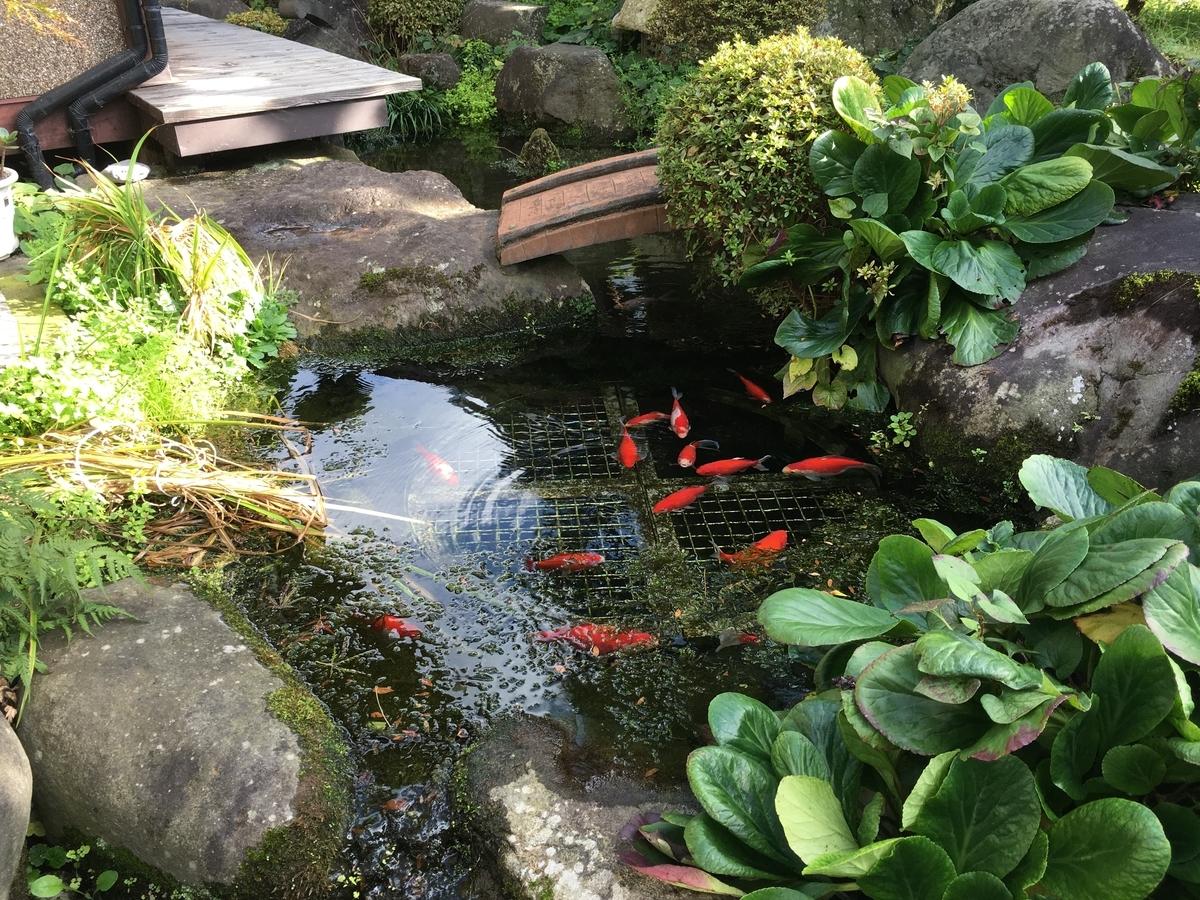 池と金魚です。