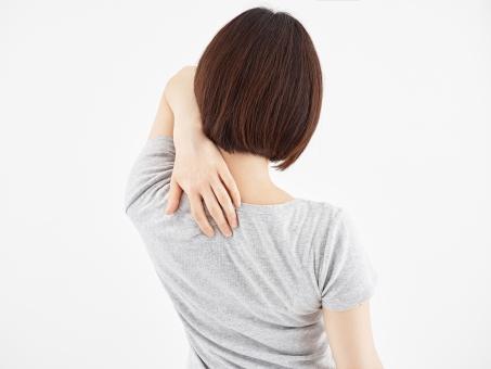 肩甲骨と背中の画像