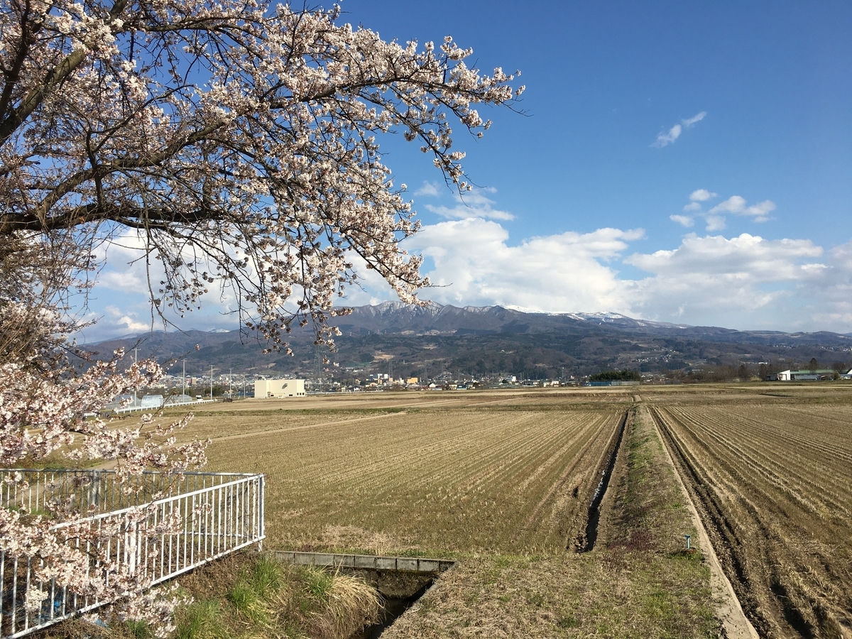 山形市の桜と蔵王と田んぼ