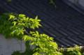 京都新聞写真コンテスト  陽光に輝く
