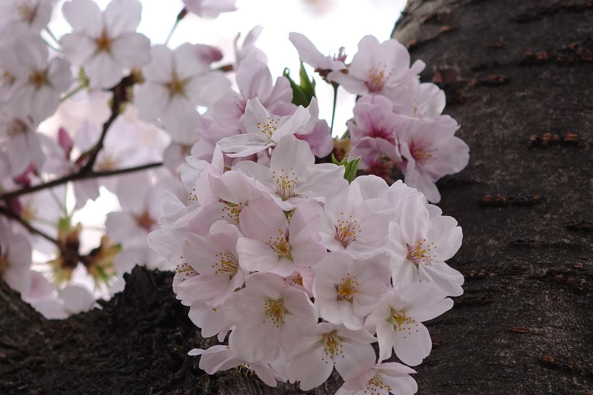 f:id:jejutour_jp:20190313172434j:plain
