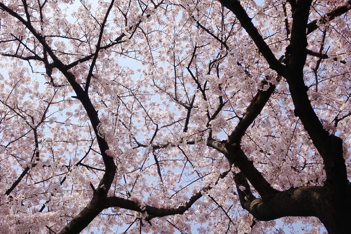f:id:jejutour_jp:20190313173811j:plain