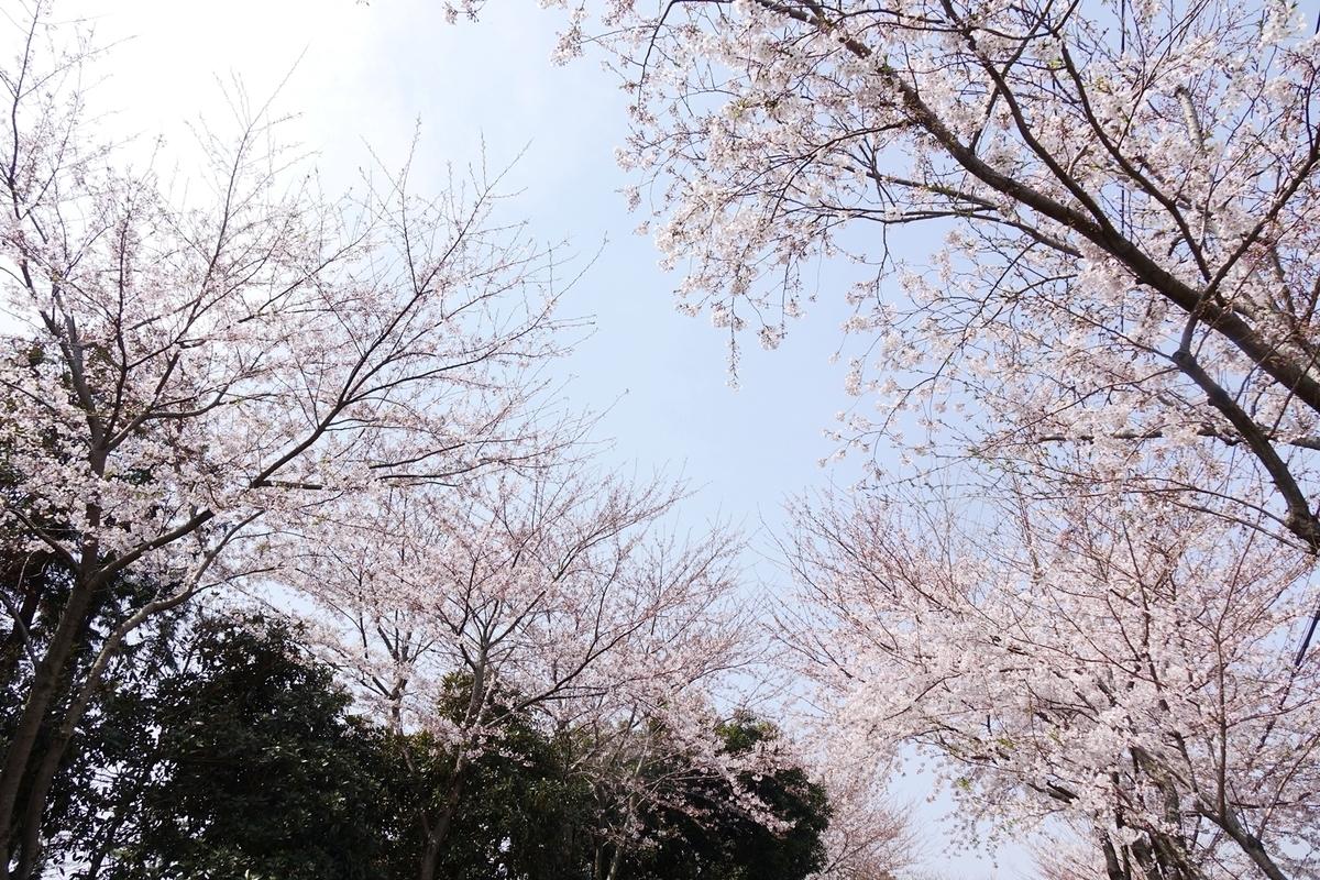 f:id:jejutour_jp:20190329144046j:plain