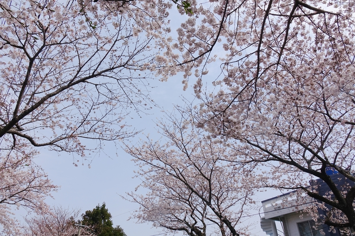f:id:jejutour_jp:20190329151515j:plain