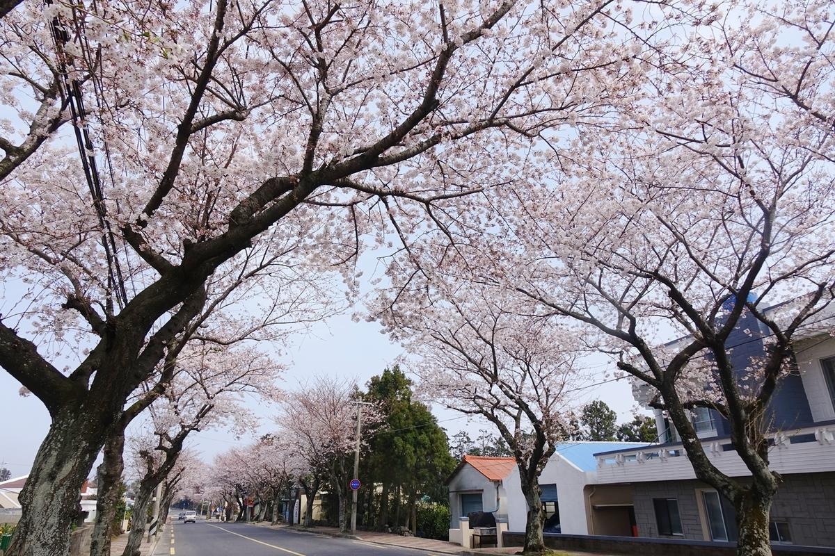 f:id:jejutour_jp:20190329152702j:plain
