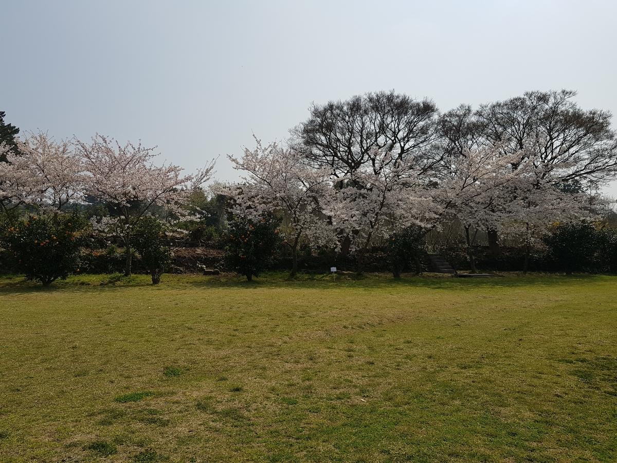 f:id:jejutour_jp:20190406094947j:plain