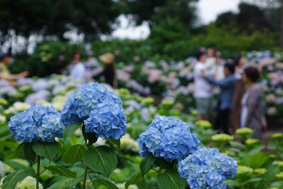 f:id:jejutour_jp:20190408155008j:plain
