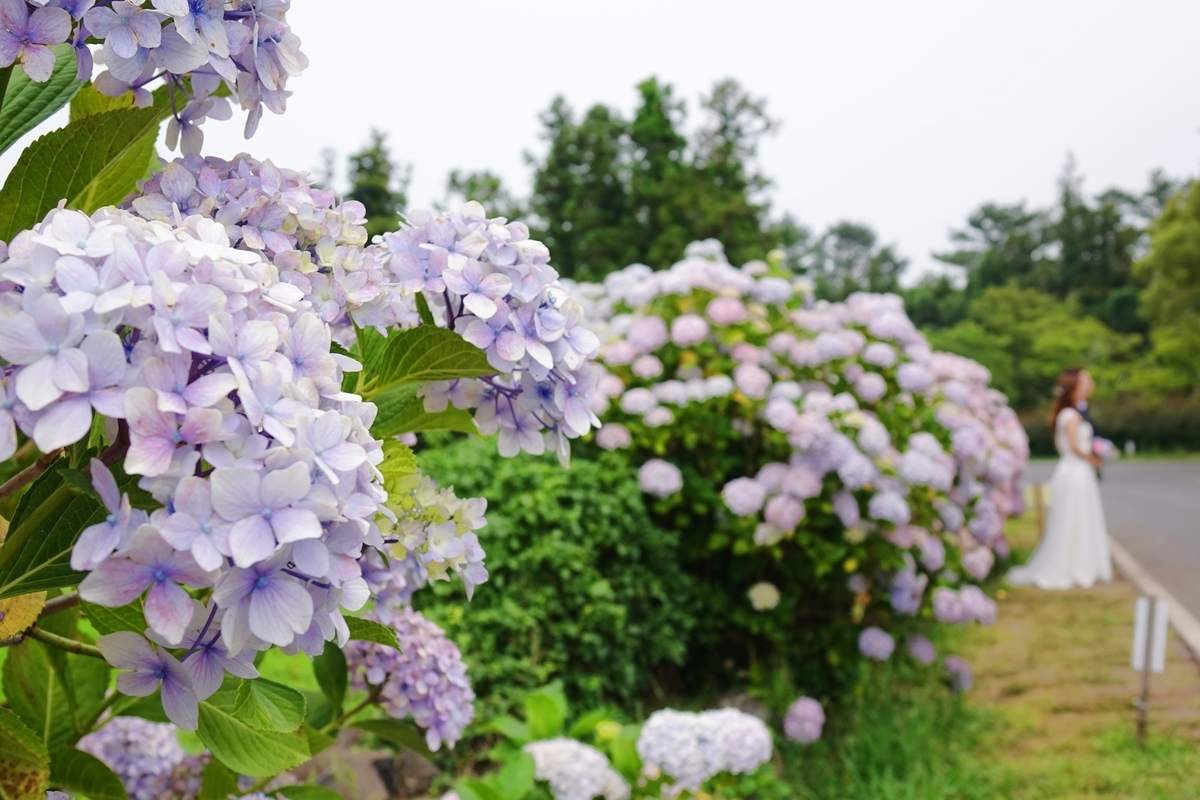 f:id:jejutour_jp:20190624100755j:plain