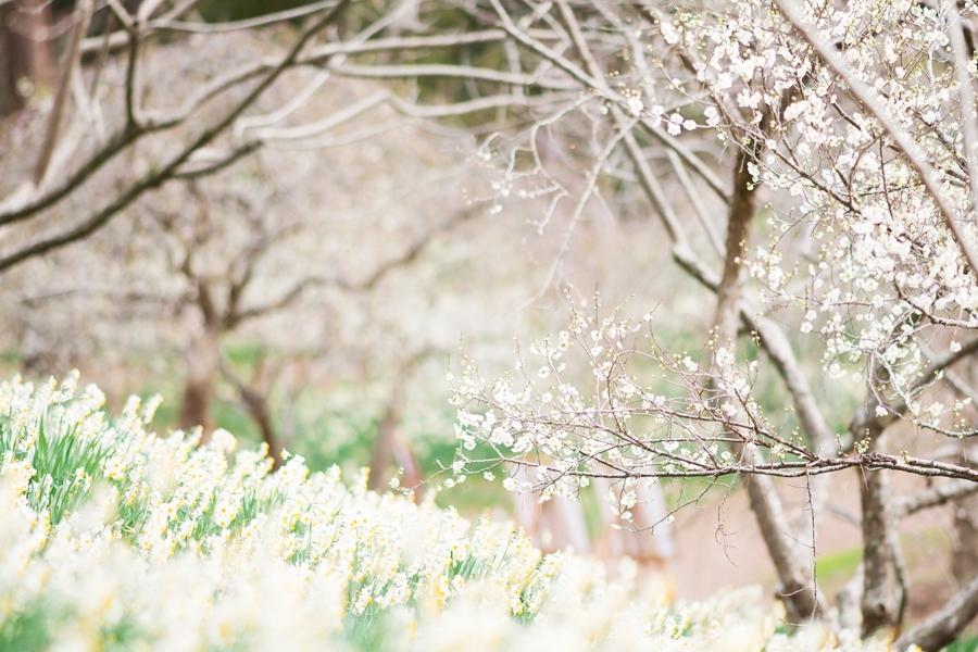 f:id:jejutour_jp:20200121154130j:plain