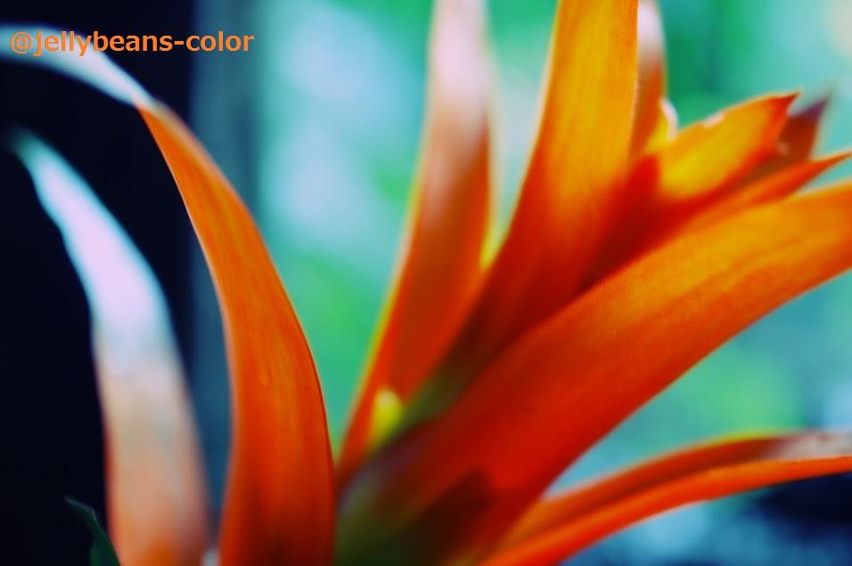 f:id:jellybeans-color:20161115000649j:plain