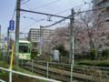 荒川線沿いの桜2