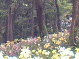 2008年7月撮影 所沢ゆり園