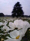 2008年10月撮影 立川