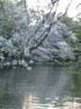 2010年4月撮影 武蔵野
