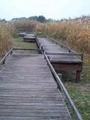 2010年11月撮影 谷中湖